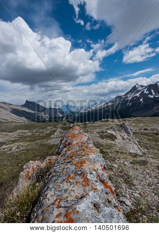 Orange Lichen Covered Rock Fin on Wilcox Pass with mountains in background