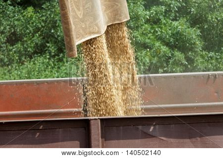 Combine harvester load wheat in the tractor trailer at the time of harvest in a sunny summer day