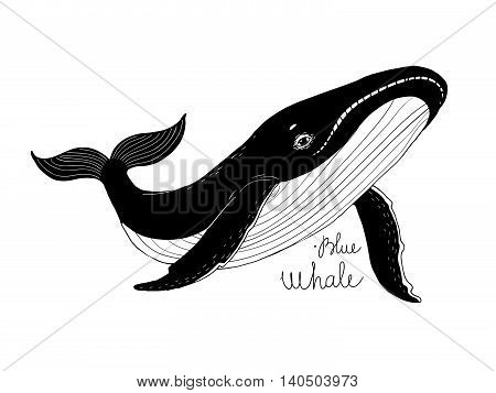 Big beautiful whale. Animal in the sea and ocean. Hand drawing isolated objects on white background. Vector illustration.