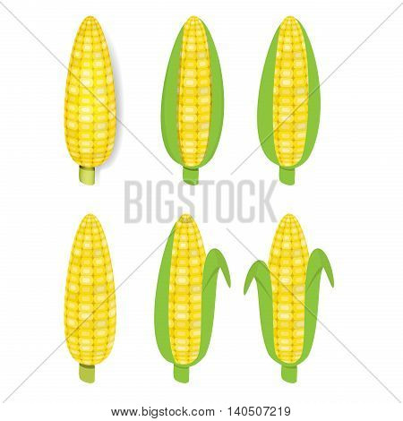 Yellow corn in flat and realistic style vector