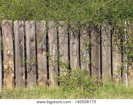 Old Varnished, Wooden Paneled Back Yard Fence 02