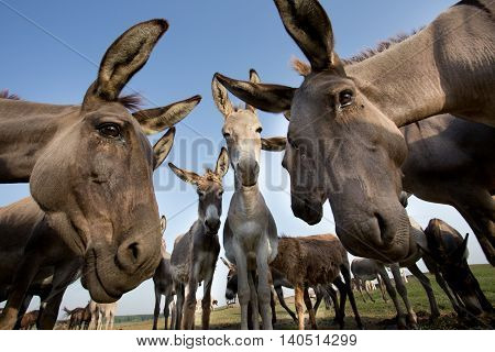 Donkeys Staring At Camera