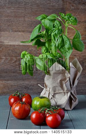 Basil Herb and Tomatoes on the wooden background