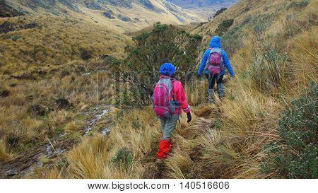 Tourists walking in the Cayambe Coca National Park