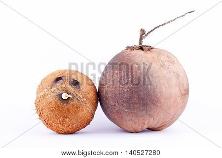 coconut shell and  brown ripe coconut for coconut milk  on white background healthy fruit food isolated