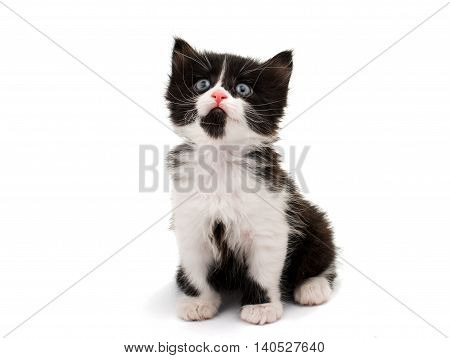 Black & white cat on white isolated background.