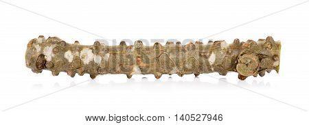 Tinospora Cordifolia Herb Isolated On White Background