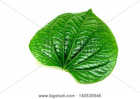 The betel (Piper betle) is the leaf of a vine belonging to the Piperaceae family