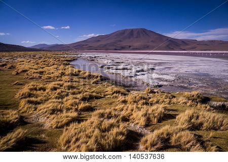 Laguna Colorada: Yellow grass sourrounding the red lake in the Bolivian Altiplano