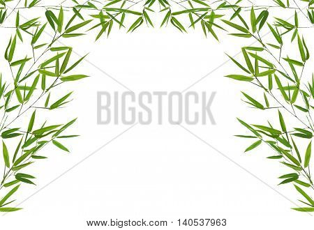 half frame from green bamboo branches isolated on white background