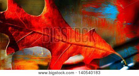 Close up of a red pin oak leaf in sunshine