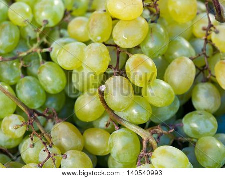 Fresh green wine grapes or white wine grapes at market for background (selective focus)
