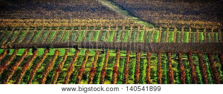 Landscape with wine fields in autumn colors