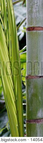 Close up of Bamboo Palm Tree stem
