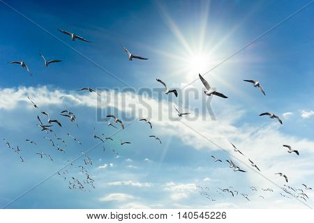 Seagulls flying in the sky. Beautiful nature.
