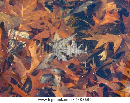 Fall Leaves Underwater