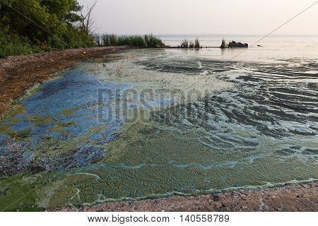 Dirty blue and green water in reservoir. Contamination by toxic algae. Environmental pollution. Ecological catastrophy. Dam on Dnieper River.