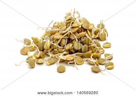 Germinated lentil isolated on a white background