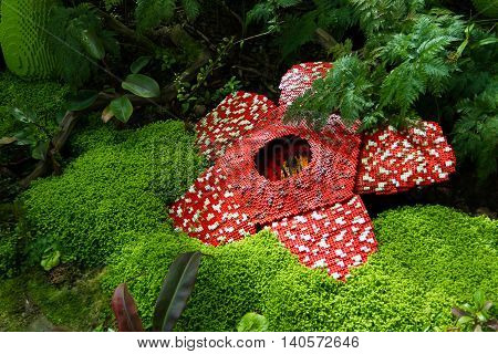 Corpse flower was made of interlocking plastic bricks toy. Scientific name is Rafflesia kerrii Rafflesia arnoldii Stinking corpse flower. The largest flower in the world.