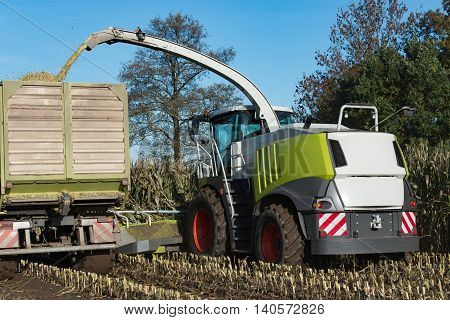 Forage at harvest of corn silage in order