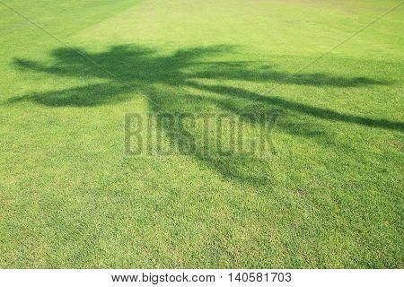 Coconut Tree Shadow On Green Grass Field