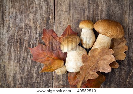 Boletus edulis mushrooms on wooden background. Top view