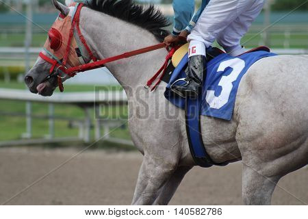 race horse thoroughbred mare on the track