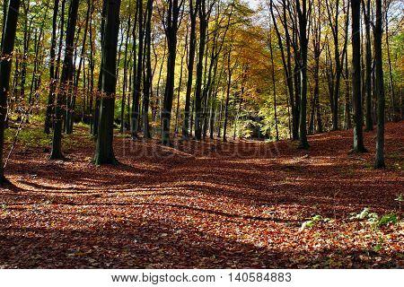The road through the autumnal park nature landscape