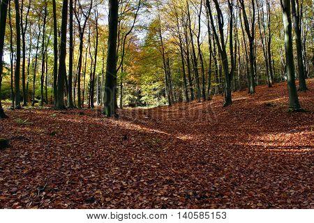 Landscape autumn in the forest nature landscape