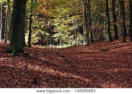 Autumn colors in the forest nature landscape