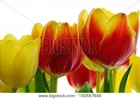Bunch of tupelo flowers against a white background