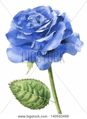 Hand painted watercolour single blue rose on a white background.