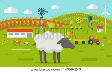 Farmyard vector illustration. Flat design. Sheep standing against the farm landscape, tractor, cow, fields on background. Organic farming concept. Traditional agriculture. Modern ecological farm.