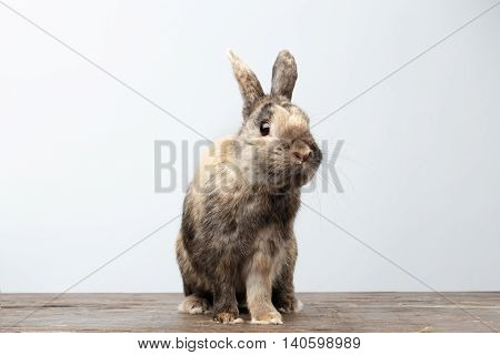 Cute Little rabbit with Brown Fur Sitting on Wood, white Background