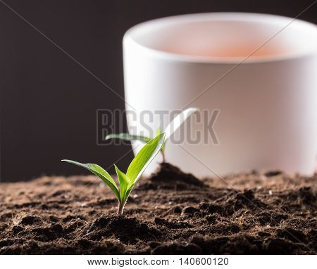 Green young sprouts growing in good brown soil and white flowerpot on background. New life concept
