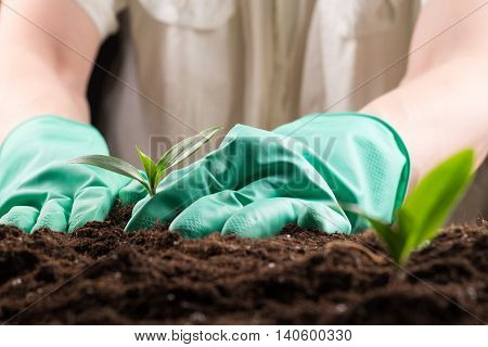 Man in green rubber gloves care about green young sprout growing in good brown soil. New life concept