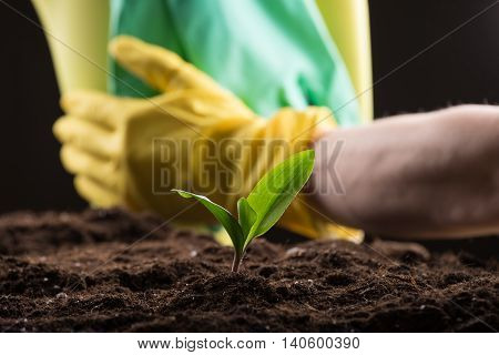 Man taking care about green young sprout growing in good brown soil with rubber gloves and watering can on background