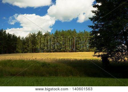Gren meadows field and forest near Chocina river in Bory tucholskie National Park in Poland under blue sky with white clouds.Horizontal view.