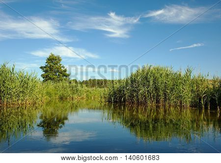 Corridors water lakes among the thick reeds and marshes in summer under blue sky with white clouds in poland Bory Tucholskie. Horizontal view.