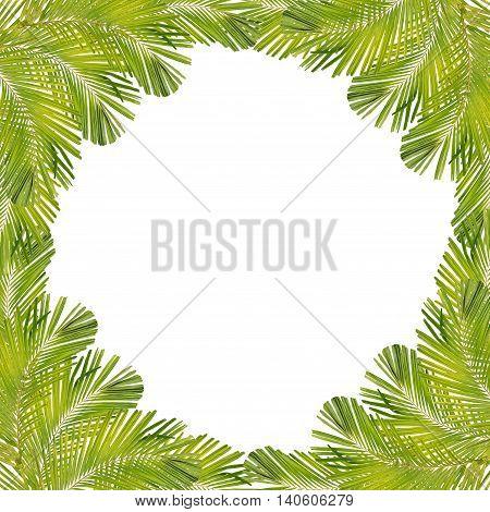Palm leaf fram isolated on white background