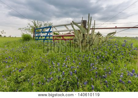 Bluebonnet field and Texas flag gate in countryside of Ennis TX