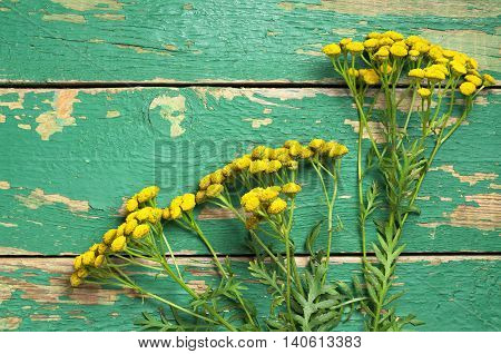 Flowers of tansy on a old green wooden background top view. Medicinal plants