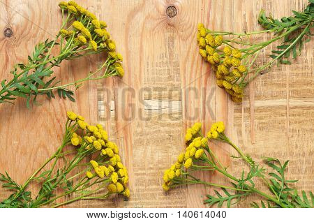 Medicinal plant tansy on a old wooden table top view