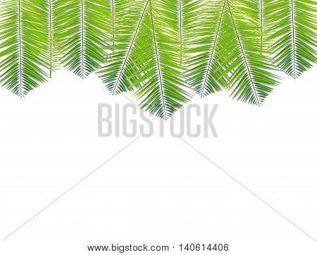 Palm leaf border isolated on white background