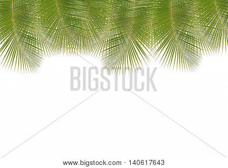 Coconut leaf border isolated on white background