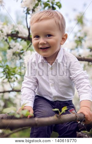 little boy blond in a white shirt and blue pants sitting on flowered tree Apple tree white flowers