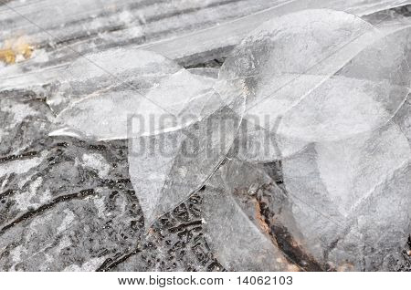 Leaves Of Ice
