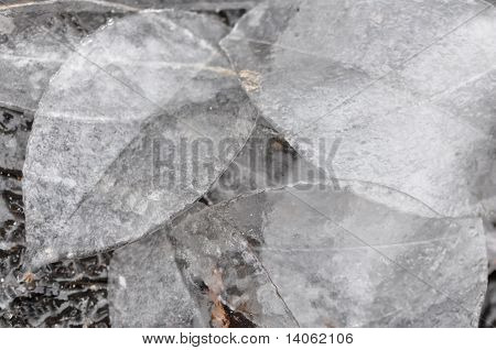 Group Of Ice Leaves