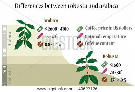 The Differences beween coffee robusta and arabica.
