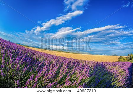 Lavender Field Against Blue Sky In Provence, France